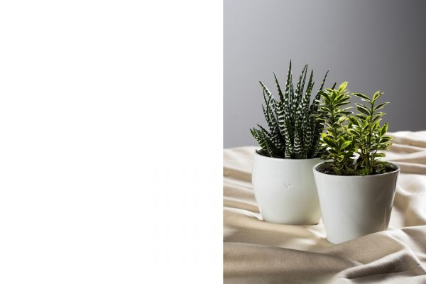 two mini white porcelain pots with plants - handmade - Federica Ramacciotti