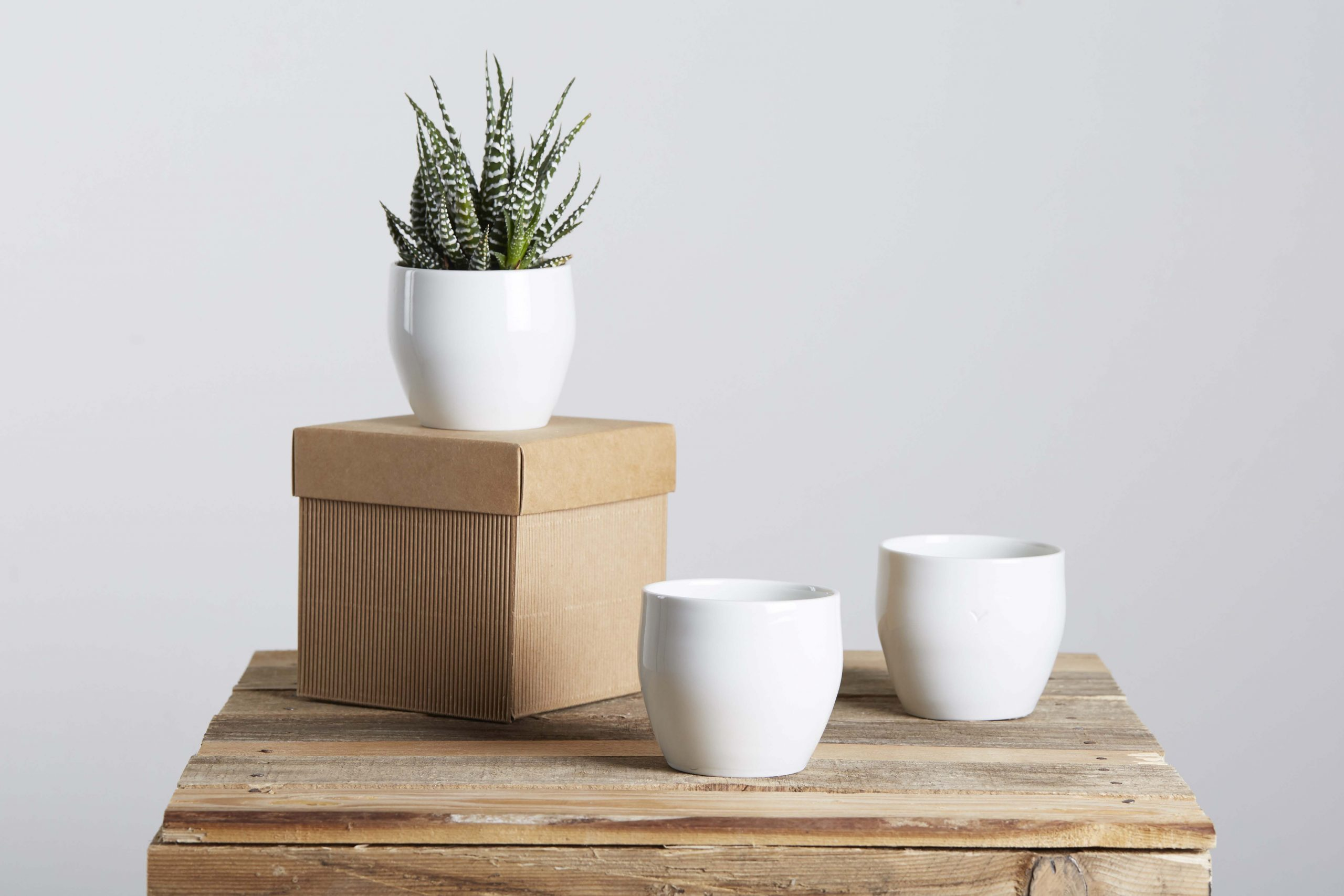 mini white porcelain vases with the plant and their box for favors - handmade - Federica Ramacciotti